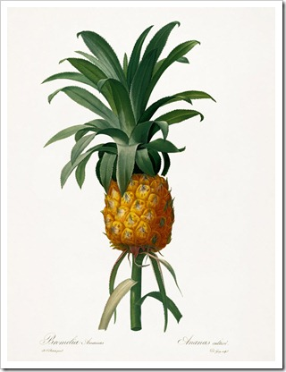 redoute_Ananas cultive