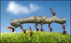 ants-workaholics