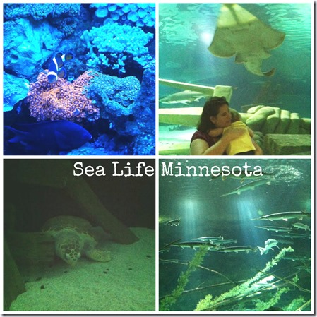 Many Waters Sea Life Minnesota Aquarium Mall of America
