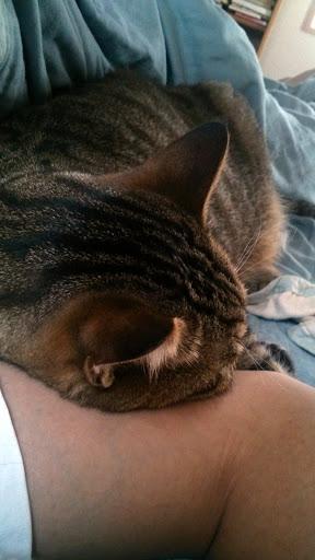[写真]腕枕でおやすみになっているの図
