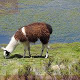 Arica - Parque Nacional Lauca  (6 de 10).jpg