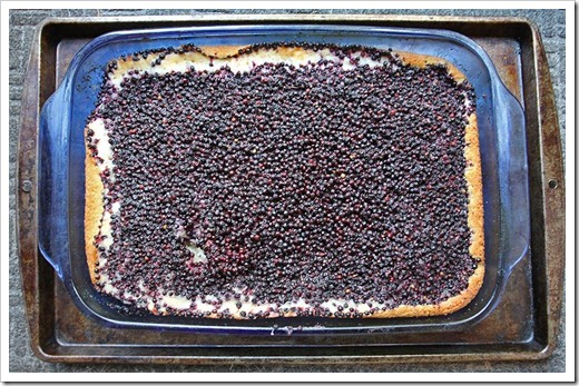 110709_elderberry_buckle