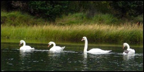 Kayaking Salt Pond & Nauset Marsh 027