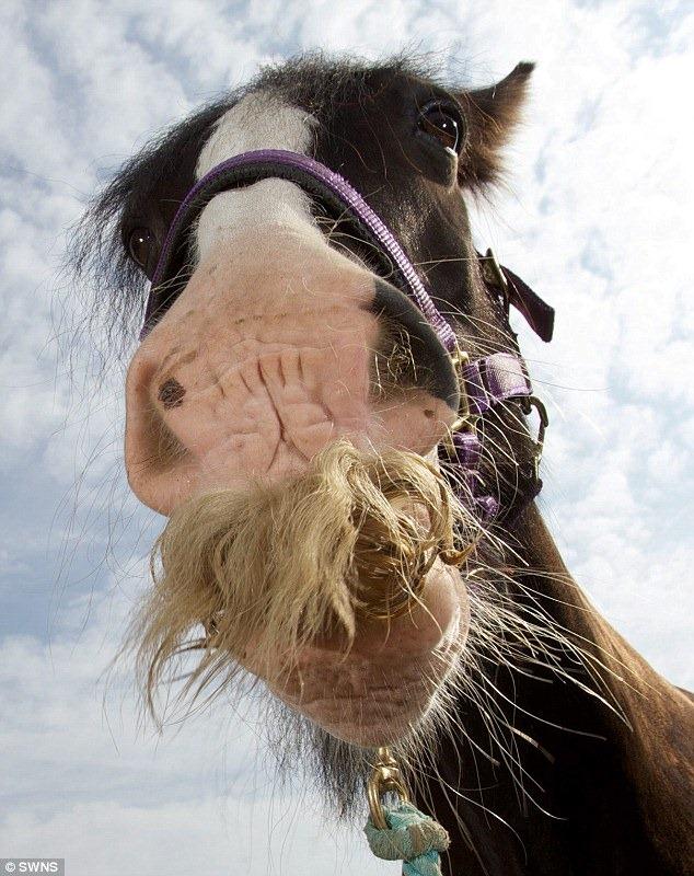 horse-moustache1