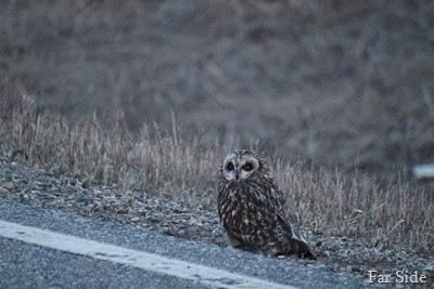 Owl April 20 2014