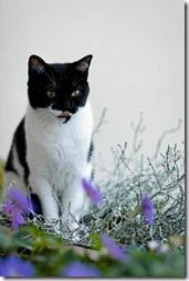 10 -Fotos de gato buscoimagenes (21)