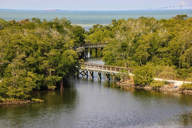 Robinson Preserve Tampa Bay View