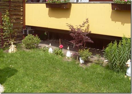 2011_07 Blumen im Garten (6) (800x565)