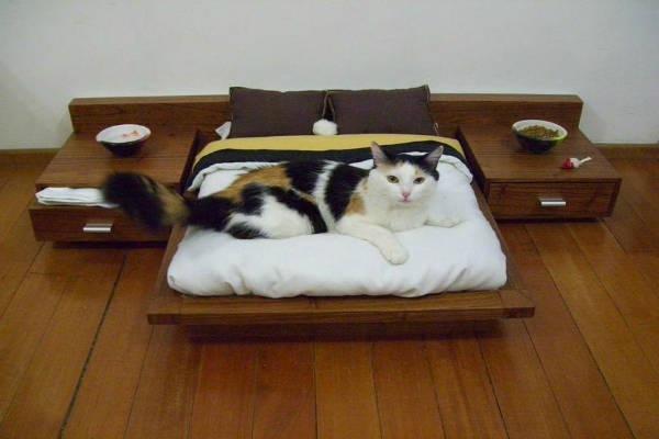 Cama-Mesinha-Cabeceira-Pets-Cachotto-Gato-