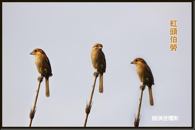 bird0489