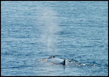 07c - Whales -