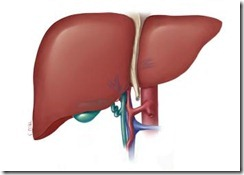 liver_hepatitis_a