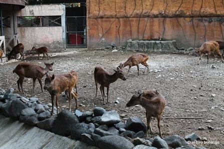 manila zoo 20
