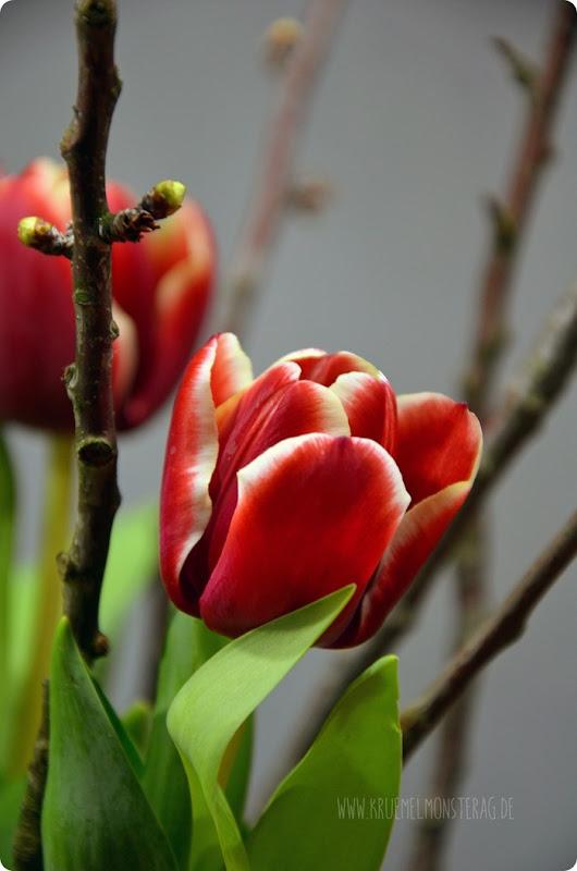 rote Tulpen (03) mit Kirschblütenzweigen am FridayFlowerday