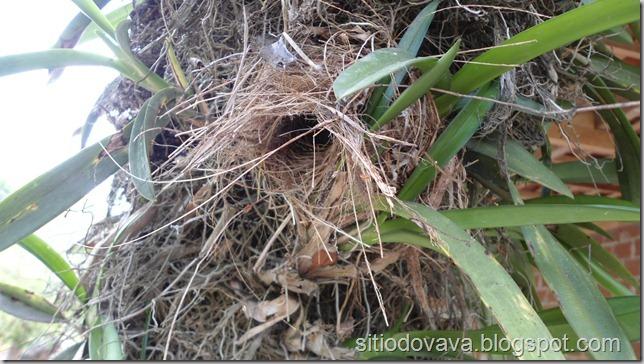 ninho da guriatã