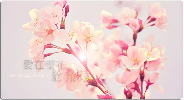 blossom拷貝