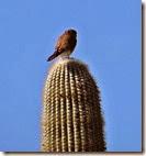 Hike 3 Saguaro West 039 crop for blog