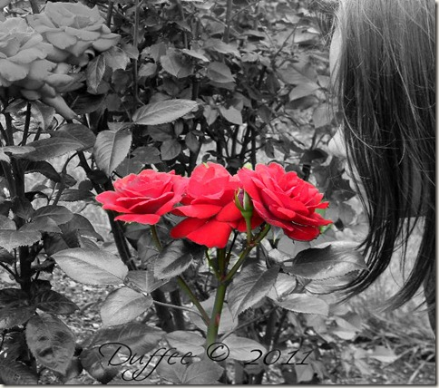 Day #61 Smell the Roses
