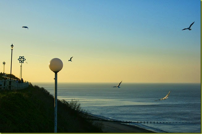 Seagulls over Cromer