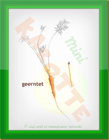 Minimöoehre1