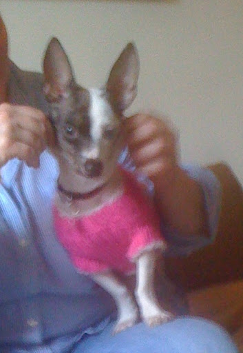 Kelly, Pepper's forever mom, outfitted Ms. Pepper in a fab pink sweater for her day in the big city!