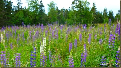 Acadia National Park_111