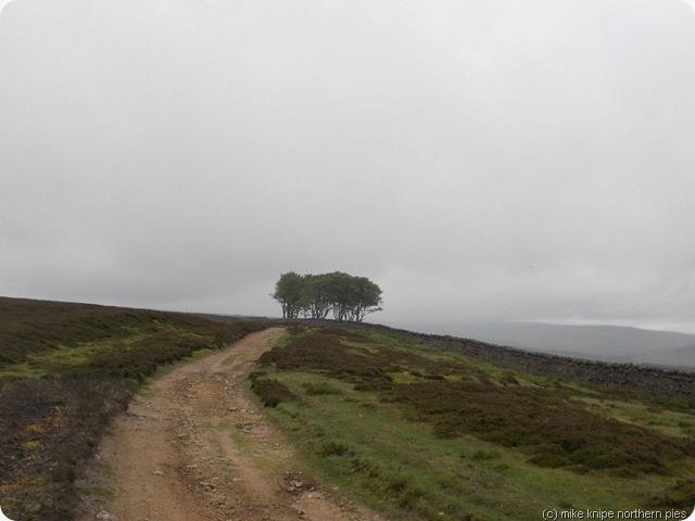 efelent trees