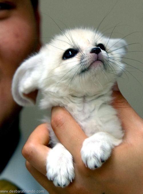 animais recem nascidos filhotes fofos desbaratinando (3)