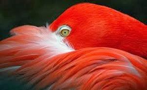 Amazing Pictures of Animals, Photo, Nature, Incredibel, Funny, Zoo, Flamingos or Flamingoes, Phoenicopteridae,  Aves, Bird, Alex (3)