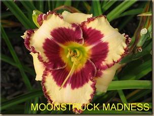 MOONSTRUCK_MADNESS_f