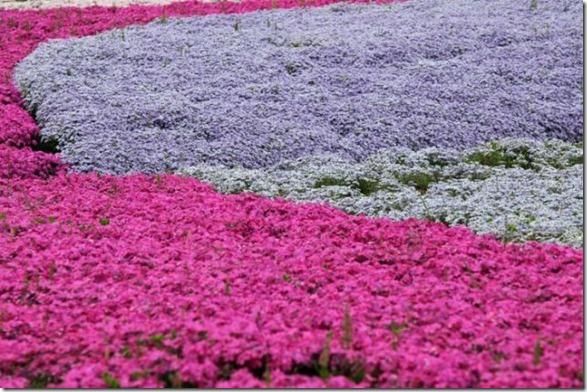 pink-park-japan-19