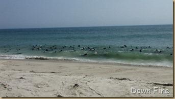 Birding south beach_055