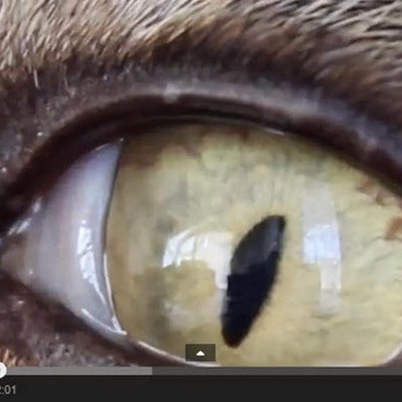 Πως βλέπουν τα ζώα το κόσμο