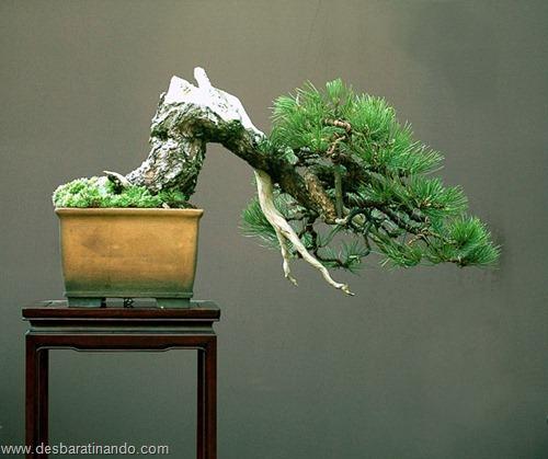 bonsais arvores em miniatura desbaratinando (2)