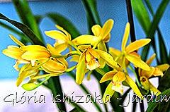 Glória Ishizaka - Jardim Botânico Nagai - Osaka 45