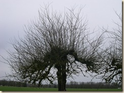tree gone wild
