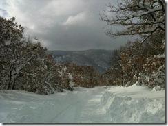 bosco neve