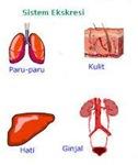 macam-macam alat sistem ekskresi