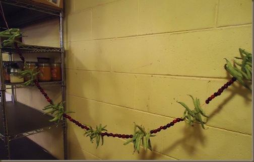 Green Beans 7