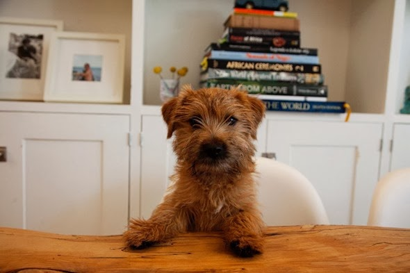 lyndsay caleo pup2