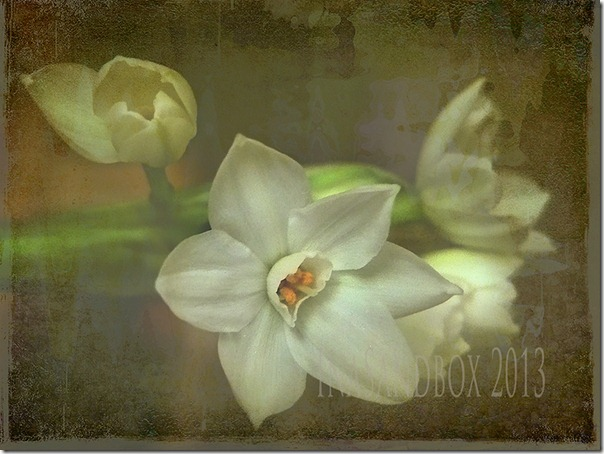 paperwhites with antique deskpadpdpa