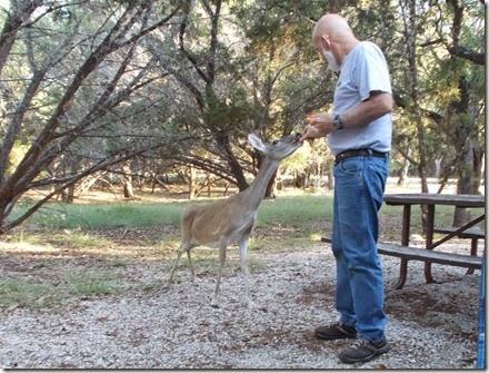 Deer visit 010