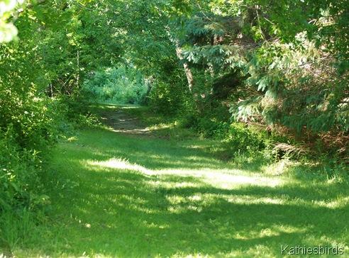 7. woodland path-kab