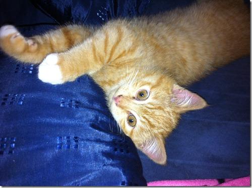 2011_12 Garfield (1)