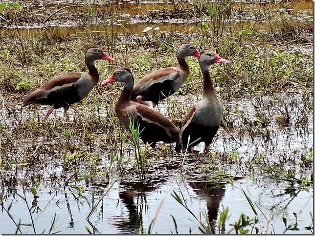 Pantanal_DSC08676
