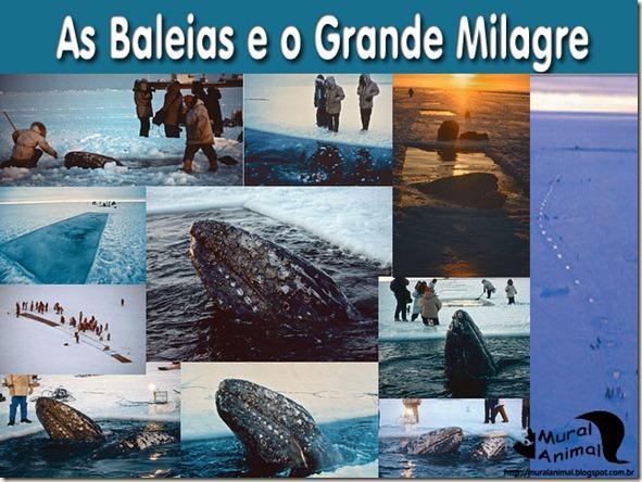milagre-baleias
