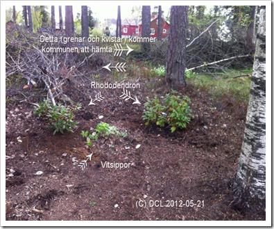 Woodlandplanting