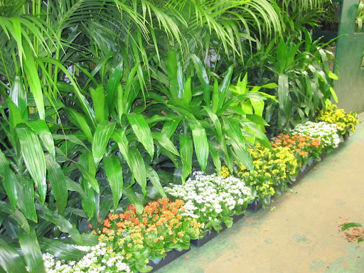 A line of different plants and flowers.