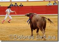 ©Dolores de Lara (67)