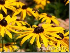 Bee amongst Composites